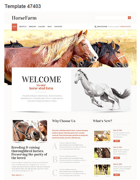 WordPress Theme 47403